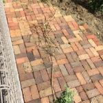 庭にはびこる笹の駆除 根を掘り起こす!!